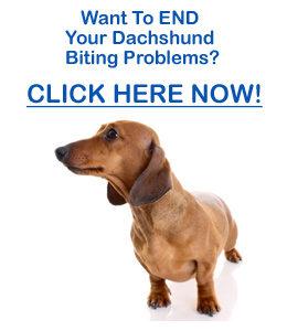 dachshund barking