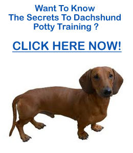 Potty Training Dachshund