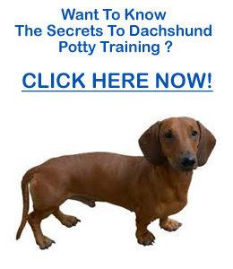 Potty Training Dachshund