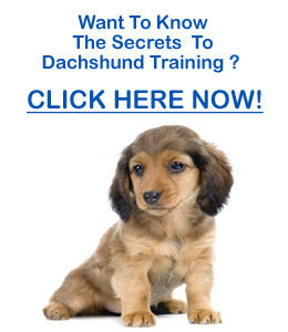 dachshund training