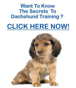 Dachshund House Training