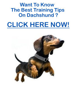 Dachshund Training Tips